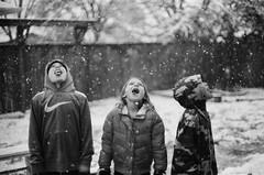 A Taste of Winter (Jason _Ogden) Tags: canonftql sweethome film snowfall ilforddeltaprofessinal400 home snowing oregon blackandwhite atasteofwinter snow analogue tongues cold winter backyardshenanigans