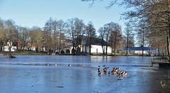 27/1 2018. (johnerlandaxelsson@gmail.com) Tags: gimo uppland sverige vinter natur landskap landscape johnaxelsson