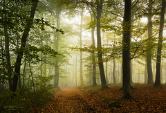 Forest light (Rita Eberle-Wessner) Tags: nature natur wald forest woods weg path nebel fog foggy neblig buche beeches atmosphere mystisch zauberwald woodland spruce laub leaves autumn herbst buchen odenwald