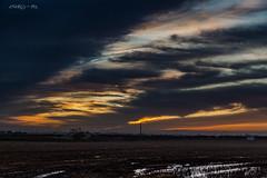 Sunrise (deltic17) Tags: sunrise morning early am tree colours fresh lastday