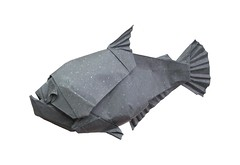 Hydrolycus armatus (folding~well) Tags: origami paper folding paperfolding monsterfish fish amazon freshwater