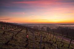 Blue hour, in the vineyard (ZeGaby) Tags: champagne exposureblending landscape leverdesoleil mareuilsuray marne naturephotography paysage paysagedechampagne pentax2470mm pentaxk1 sunrise vignes vignoble vines vineyards aÿchampagne france