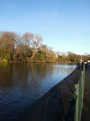 Plattfield Park, Manchester, UK. (daveandlyn1) Tags: water lake fowl birds trees island plattpark manchester pralx1 p8lite2017 imagetakenwithahuaweip8 smartphone psdigitalcamera cameraphone