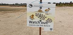 Chicks (Tony Markham) Tags: sign warningsign endangeredspecies lake wetland ramsar culburrabeach shoalhaven berejiklianbushfires lakewollumboola