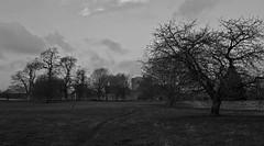 Photo of Winter @ Brougham (mono)