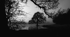 Defined (Matthew Johnson1) Tags: ethereal calm visual fineart blackandwhite defined boundary water mist nature tree silhouette form shape