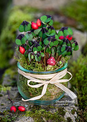 Happy New Year... (sch.o.n) Tags: agriculture background basket berry birthday botany bush closeup clover clovers color farm flora floristic food fortune fourleaf fresh fruit garden glass green harvest healthy hope hopeful leaf leaves luck lucky moose mushroom natural nature new organic oxalis plant red ripe silvester success successful summer sweet symbol symbols talisman wish year