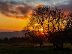 Sunset at The Stiperstones (Fin Wright) Tags: ianwright 2019 blip finwrightphotographycouk ian httpswwwellesmerephotocouk finwright canon shropshire stiperstones thestiperstones shropshirehills sunset thebog heathmynd tree sky
