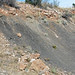 Gray shale (Benton Shale, Upper Cretaceous; Red Rock Canyon Open Space, Colorado Springs, Colorado, USA) 12