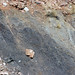 Gray shale (Benton Shale, Upper Cretaceous; Red Rock Canyon Open Space, Colorado Springs, Colorado, USA) 11