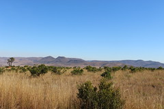 African Veld (Rckr88) Tags: mpumalanga southafrica south africa african veld africanveld greenery green grass nature naturalworld outdoors travel travelling mountains mountain