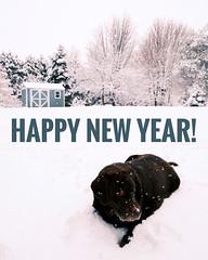 Happy New Year! (Dan Haug) Tags: happynewyear newyears rolo chocolatelabradorretriever dog mansbestfriend greely ontario canada winter snow snowy stormy yard december31st 2019 xpro3 xf1024mmf4rois xf1024 fujifilm fujixseries mirrorless