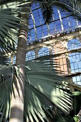Rawlings Conservatory ~ Palm House (karma (Karen)) Tags: baltimore maryland rawlingsconservatory palmhouse palmtrees shadows windows texture htt htmt hww