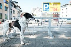 Dog Parking (jeremy_d_smith) Tags: fuji x fujifilm fujinon xseries fujix fujilove fujixseries street urban taiwan streetphotography kaohsiung xt3 classicchrome xf16mm xf16mm14