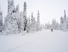 Down from hill (ikkasj) Tags: winter ski snow skiing crosscountryskiing lapland finland outside nature white