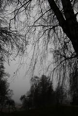 Happy 2020 everyone! (DameBoudicca) Tags: sweden sverige schweden suecia suède svezia スウェーデン värnamo tree träd baum albero árbol arbre 木 fog dimma nebel niebla brouillard nebbia 霧 きり