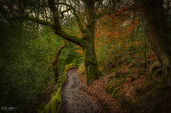 The Perfect Path for 2020 (Kev Walker ¦ Thank You 4 Comments n Faves) Tags: forest nature landscape tree woods background light environment beautiful outdoor green scenery scenic scene natural trees morning park wood season mystery foliage sunlight woodland fantasy path dark pine sun autumn night colour mysterious travel bright plant leaf sunny fall outdoors coniferous