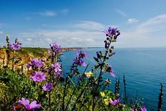 Yes, I want spring back ! (Radu Andrei B) Tags: kaliakra purple colors spring spein sea capekaliakra bulgaria