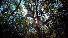 Sun through the trees (tetuani1399) Tags: sunlight sun sunny trees fence colours woodland landscape coth5 soleado arboles cerca colores bosque paisaje sol shadows light gate magic path way hope arbol tree contraluz backlight árbol naturaleza verde ramas altura