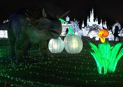 Holiday Lights 17 (stevensiegel260) Tags: randallsisland holidaylights christmaslights luminocity newyork