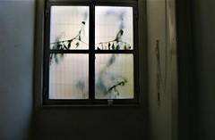 absinthe (*F~) Tags: lisboa portugal hospital window green greenfairies glass dream past present future thehours spirits
