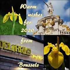 To my Flickr friends: (Els Herten) Tags: 2020 newyear brussels city belgium iris yellow architecture statue sculpture flower