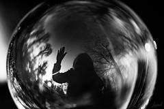 Ce soir, je vous souhaite à tous une belle soirée (que vous ayez décidé de réveillonner ou pas). Au revoir et à l'année prochaine amis photographes. (LACPIXEL) Tags: aurevoir adiós goodbye nextyear 2019 próximoaño annéeprochaine ami amigo friend photographe photographer fotógrafo boule bola ball verre vidrio glass reflet reflection reflejo arbre tree árbol noiretblanc autorretrato autoportrait selfportrait sony flickr lacpixel