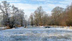 Askham Bog in winter (robin denton) Tags: askhambog yorkshirewildlifetrust york wildlifetrust snowscape snow landscape yorkshire
