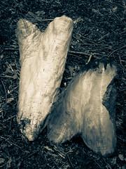 Photo of Tree trunk body