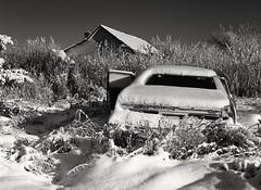 Mamiya 645 / Kodak Tri-X 400 / Orange Filter. (Fistfulofpowder) Tags: black white bw film medium format mamiya 645 snow winter canada alberta abandoned amc matador classic car house cold