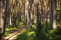 *** (pszcz9) Tags: polska poland przyroda nature natura naturaleza las forest forestimages ścieżka path rezerwat naturalreserve borytucholskie beautifulearth pejzaż landscape sony a77