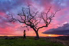 Paris and the oak tree. (Eric Zumstein) Tags: calabasassunset paris westhills california unitedstatesofamerica oaktree