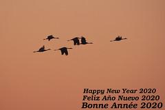 voeux m 2020 (Marc ALMECIJA) Tags: oiseau oiseaux bird birds sunrise nature natur panasonic g9 100400 camargue wildlife voeux