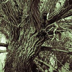 Photo of Lichen Lines