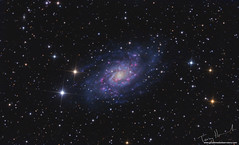 Spiral Galaxy NGC 2403 (Terry Hancock www.downunderobservatory.com) Tags: astronomy space sky astrophotography astroimaging spiral galaxy westernslopes colorado grandmesaobservatory deepsky photography
