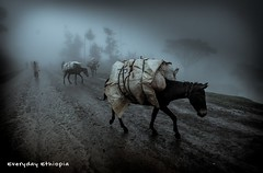 ️🗻 On the way to Ⓓⓞⓡⓩⓔ; 🚶‍♂️ To #Dorze Tribes Gamo Gofa Zone; #Foggy #Roads; South #Ethiopia    #fog #nature #LandofOrigins #Travel #african #EverydayEthiopia #donkey #EverydayAfrica #Photography #Pictures #portrait #instadaily #Photogr (Everyday Ethiopia) Tags: travelgoals african donkey everydayeverywhere instapic nature instagram landoforigins instadaily countryside photographyisart landscapes mountain wonderlust dorze picoftheday everydayafrica photography like4likes foggy travelphotography travel everydayethiopia fog backpacking ethiopia pictures portrait roads
