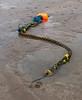 Mooring snake (20191231 1504)