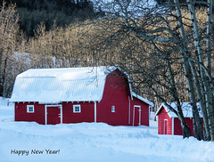 Happy New Year! (annkelliott) Tags: alberta canada swofcalgary sheepriverpriddisturnervalleychristmasbirdcount2019 nature scenery landscape view rural ruralscene hill hills foothills tree trees forest farm ranch buildings barn shed house red field snow outdoor happynewyear 20192020 winter 27december2019 canon sx60 canonsx60 powershot annkelliott anneelliott ©anneelliott2019 ©allrightsreserved