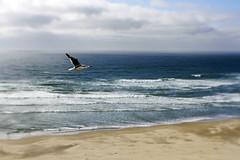 let us all soar! (1crzqbn) Tags: ocean bird seagull lensbaby sweet35 sea 1crzqbn happynewyear bokeh blur