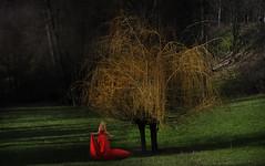 1/2020 - Processing (celestino2011) Tags: donnainrosso albero elaborazione 12020