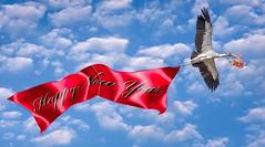 Winging In The New Year (Wes Iversen) Tags: 2020 florida happynewyear mycteriaamericana staugustine staugustinealligatorfarm tamron150600mm woodstork babies birds clouds composites sky storks text wildlife hww wingwednesday