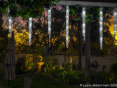 IMG_5219-Edit (Laurie2123) Tags: laurieabbotthartphotography laurieturner laurieturnerphotography laurie2123 sunset backyard home christmas2019 iphone11promax