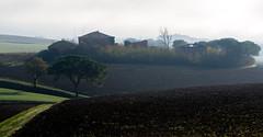 distinctive black (phacelias) Tags: marleenroelofs boerderij bomen colline farm fattoria groen heuvel hill italia pinetree pino porto toscana toscane tuscany umbria umbrie black zwart nero