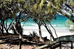 Coonarr Beach 1st January 2020 (Dreaming of the Sea) Tags: 2020 coonarrbeach nikkor18200mm nikkor nikond5500 bluewater waves sky sea sand surf newyearsday 1stjanuary bundaberg queensland australia sheoak