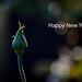 Happy New Year...in Explore #316