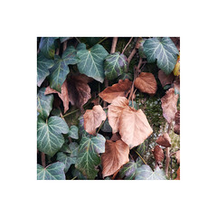 (a└3 X) Tags: natur nature alexfenzl outdoor makro macro austria color macrofotografie wildlife 3x a└3x availablelight bokeh closeup wow outside