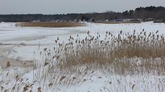 Bleak Beauty (Art of MA Foto Stud) Tags: winter snow water ice cold frozen massachusetts wareham weweantic marsh reeds interstate slush