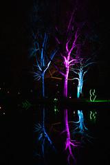 Winterleuchten_Spiegelung_3 (williespictures) Tags: nightlights dortmund germany westfalenpark winter night colorphotography colourphotography reflection waterreflection