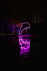 Winterleuchten_Spiegelung_2 (williespictures) Tags: nightlights dortmund germany westfalenpark winter night colorphotography colourphotography reflection waterreflection