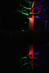 Winterleuchten_Spiegelung_1 (williespictures) Tags: nightlights dortmund germany westfalenpark winter night colorphotography colourphotography reflection waterreflection